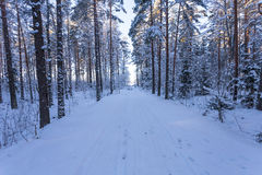 Winter forest with road covered with snow Royalty Free Stock Image