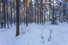 Winter forest with road covered with snow Royalty Free Stock Photos