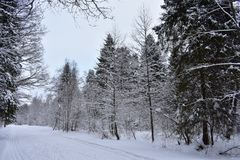 Winter in the forest and the road is especially beautiful phenomenon. A huge amount of snow, which is covered all around stock image