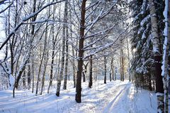 Winter forest and the road, through him, the eternal subject for photographers and artists. Indeed, there is something particularly attractive mysterious and royalty free stock photo