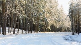 Winter forest road Royalty Free Stock Photography