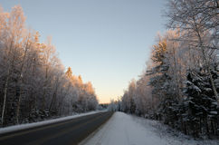 Winter forest road in a magical light Royalty Free Stock Image