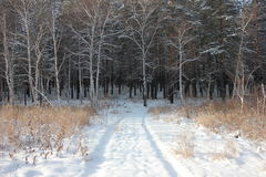 Winter forest road. Winter road through the pine forest Royalty Free Stock Photos