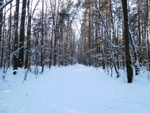 Winter forest. Winter scene, forest. Road among the pines Stock Photo