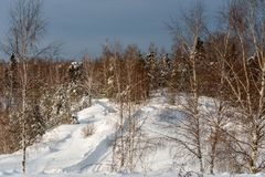 Winter forest with a road. Winter rural road through the snow-covered forest Royalty Free Stock Images