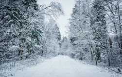 Winter forest road Royalty Free Stock Images