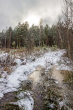 Winter forest road scene Royalty Free Stock Images