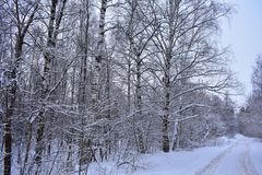Winter forest and road similar to the enchanted Kingdom. Fluffy snow-white cover covers the ground. It is also thrown on tree branches like fur coats.It seems stock photo