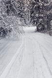 Winter forest road royalty free stock photos
