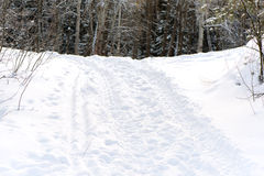 Winter forest with road Stock Image