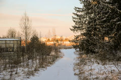 Winter forest road and sun Stock Photography