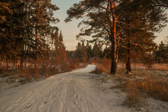 Winter forest road and sun Stock Images