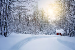 Winter forest with road and sunlight, big trees  covered snow Stock Photo