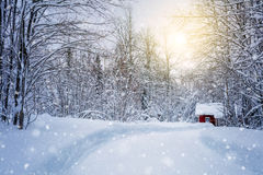 Winter forest with road and sunlight, big trees and  snow Stock Photography