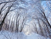 Winter forest road under crown of trees Stock Photos