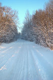 Winter forest road. White winter forest road between trees covered with snow Royalty Free Stock Image