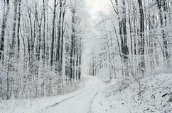 Winter forest road Royalty Free Stock Photo