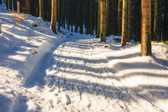Winter forest, Rusinowa Polana Royalty Free Stock Photos