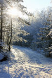 Winter forest, Russia stock photography