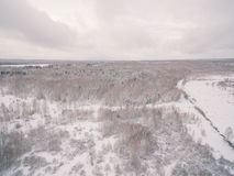 Winter forest. Russia, Moscow suburbs Stock Photo