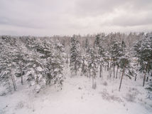 Winter forest. Russia, Moscow suburbs royalty free stock photo
