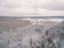 Winter forest. Russia, Moscow suburbs Stock Images