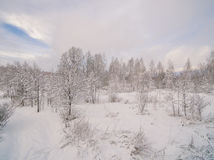 Winter forest. Russia, Moscow suburbs Royalty Free Stock Photos
