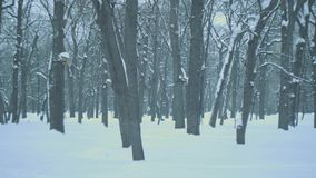 Winter forest stock footage