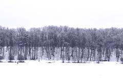 Winter Forest. In russian park Tsaritsino Stock Image