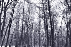 Winter Forest. In russian park Tsaritsino Royalty Free Stock Images