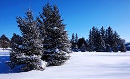 A winter forest scene Stock Photo