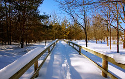 A winter forest scene Stock Image