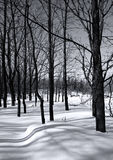 A winter forest scene. On a sunny day Stock Image