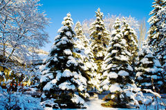 Winter forest scene Stock Photos