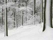 winter forest scene, hoarfrost covered trees Stock Images