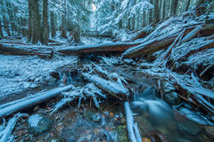 Winter Forest Scene. Winter snow scene with river in oregon Royalty Free Stock Photo