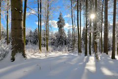 Winter Forest scenery frosty coldly. Snow-covered winter scenery frosty coldly stock image