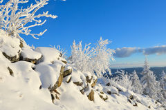 Winter Forest scenery frosty coldly. Snow-covered winter scenery frosty coldly royalty free stock images