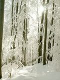 Winter forest scenery with frozen trees stock photography