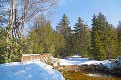 Winter forest scenery on a sunny day. Royalty Free Stock Photos