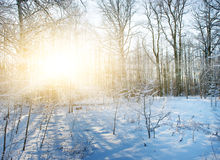 Winter forest scenic royalty free stock photography