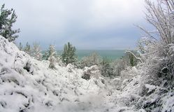 Winter forest and sea Royalty Free Stock Images