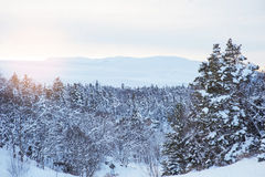Winter forest and the setting sun Royalty Free Stock Image