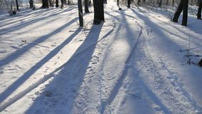 Winter forest shade from the sun by trees beautiful nature landscape stock video