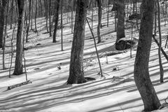Winter Forest Shadows Stockfoto