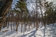 In winter forest. Stock Photography