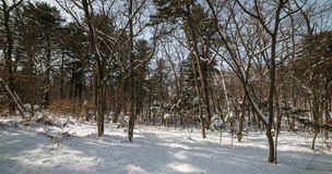 In winter forest. Stock Photo