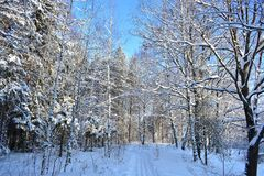 Winter forest is silence, it is an amazing elated mood stock photo