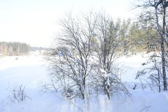 Winter forest. Silver branches. Sun ray. Winter in the woods. Landscape. White snow. The snow on the branches of trees Royalty Free Stock Images