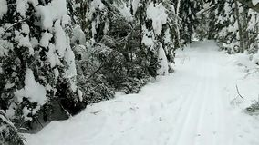 Winter in the forest. stock footage